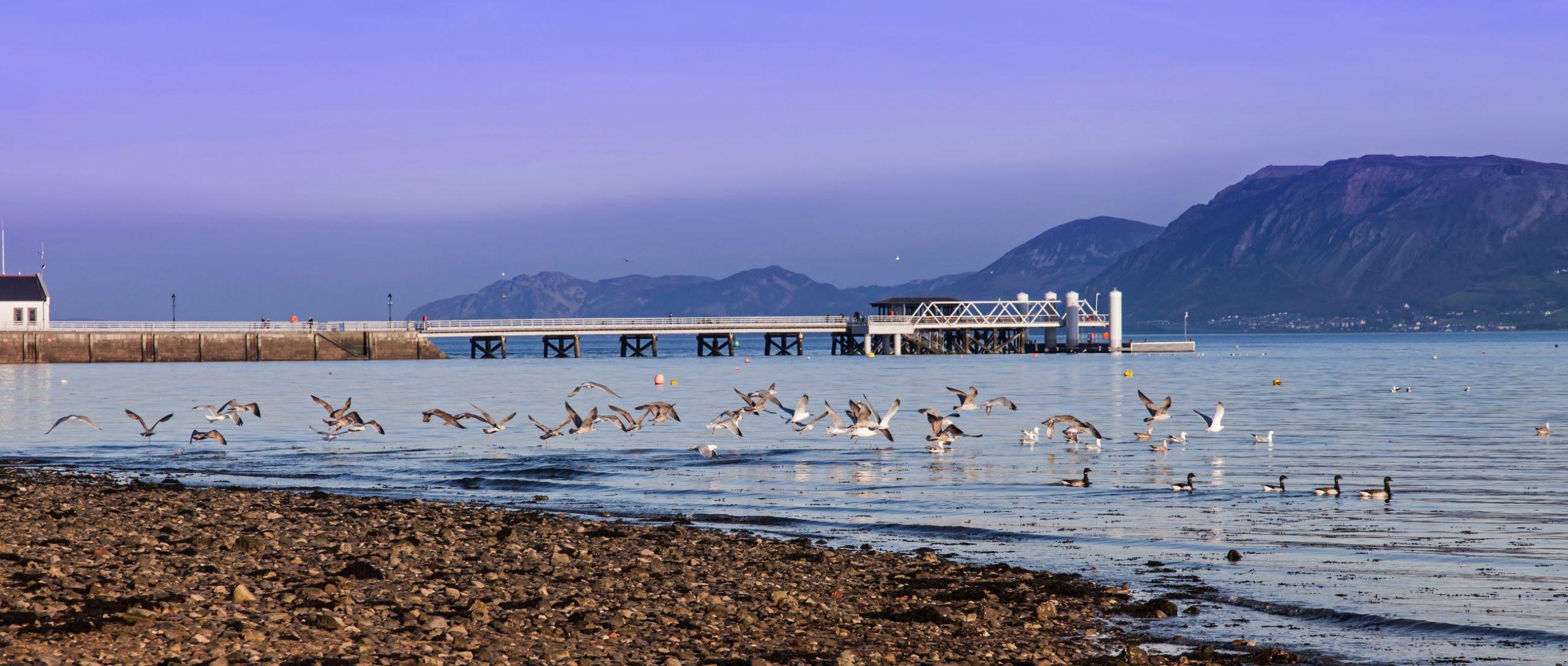 Crabbing At Beaumaris Pier