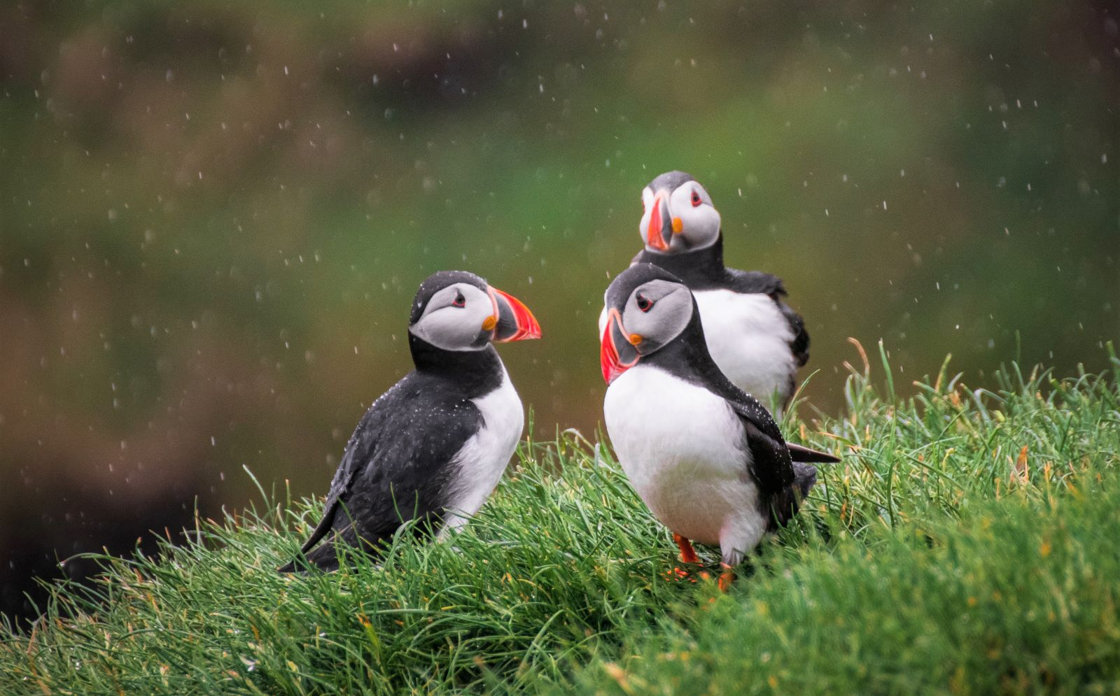 Seacoast Safaris And Puffin Island Boat Trips