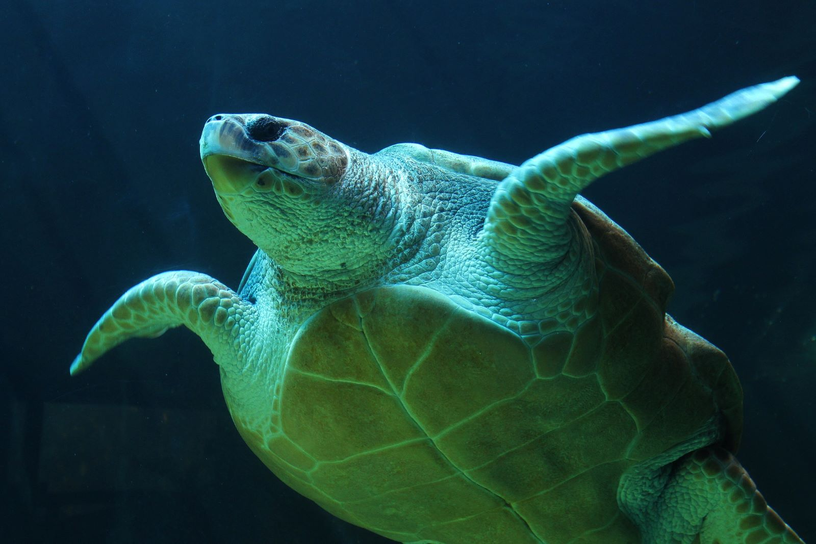 Rhyl SeaQuarium