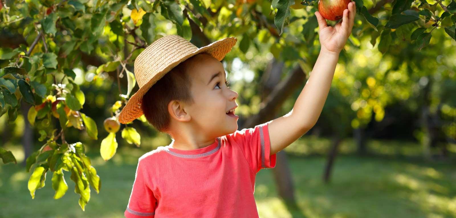Fruit & Vegetable Picking